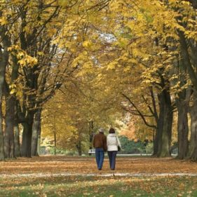 Rear view on senior couple under tree canopy in autumn